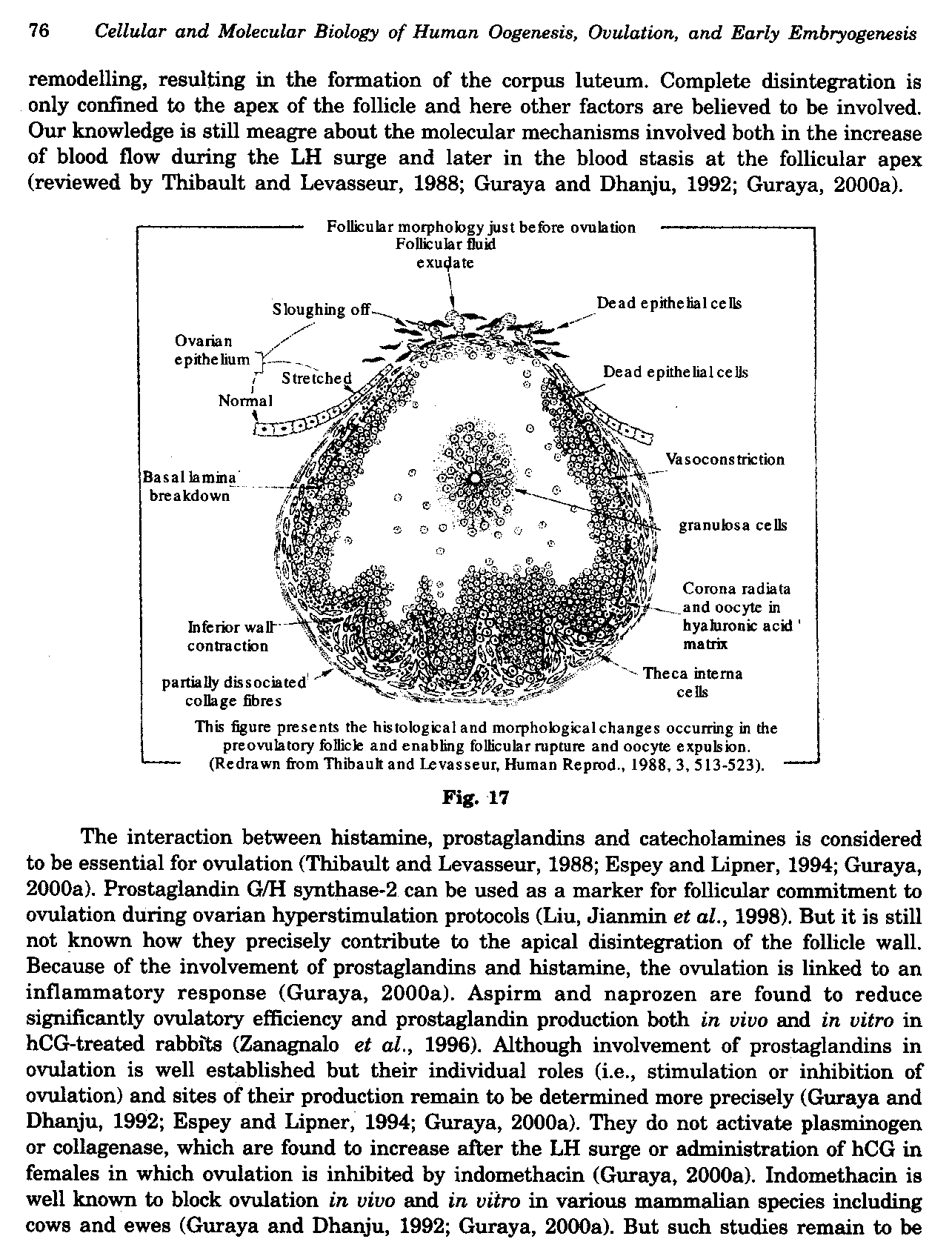 Cellular and Molecular Biology of Human Oogenesis, Ovulation and Early Embryogenesis