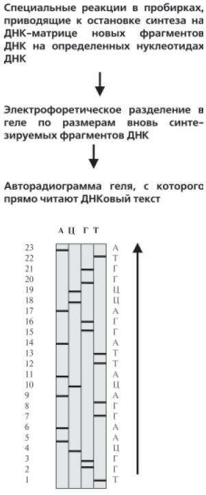 Геном человека: Энциклопедия, написанная четырьмя буквами