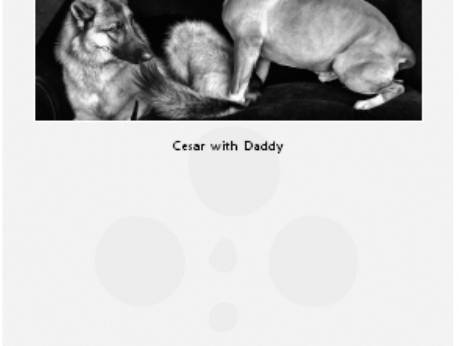Cesar's Way - The Natural, Everyday Guide to Understanding and Correcting Common Dog Problems