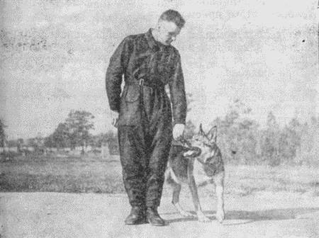 Содержание и дрессировка служебных собак