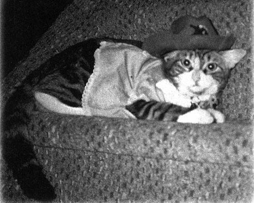 Девять жизней Дьюи. Наследники кота из библиотеки, который потряс весь мир