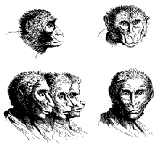 Новая теория происхождения человека и его вырождения
