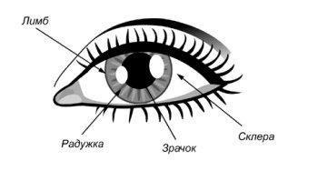 Лучшие методы восстановления зрения