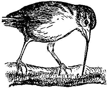 Дарвинизм в XX веке