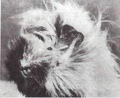 Мир животных. Домашние животные