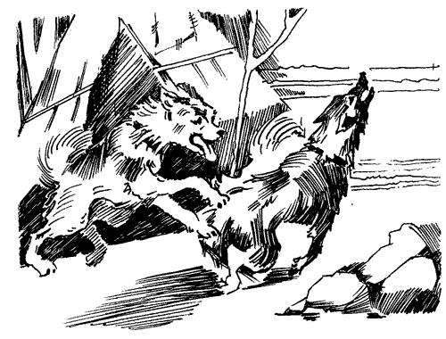 Біле Ікло (Збірник)