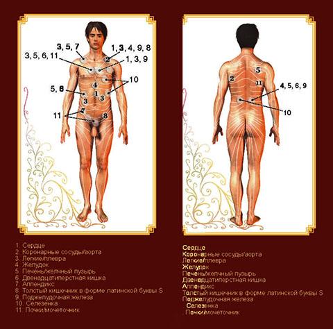 Даосское упражнение «Олень» для сексуального здоровья и долголетия