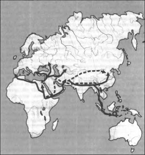 Становление и первичное расселение рода «Homo»
