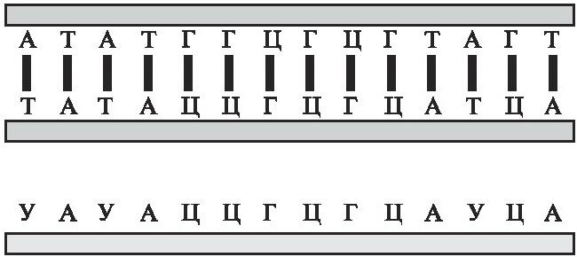Мусорная ДНК. Путешествие в темную материю генома