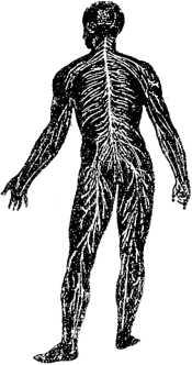 В тайниках человеческого тела