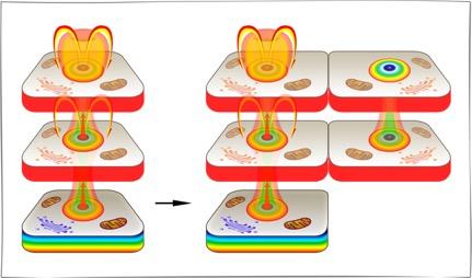 Книга 3. Клетка и здоровье (причины здоровья в живой клетке)