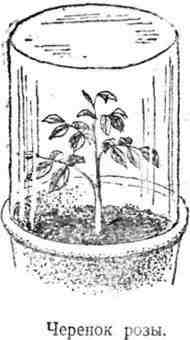 Путешествие с домашними растениями