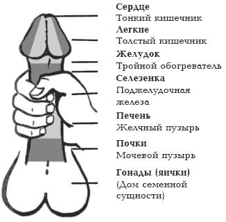 размер члена для секса Калужская область