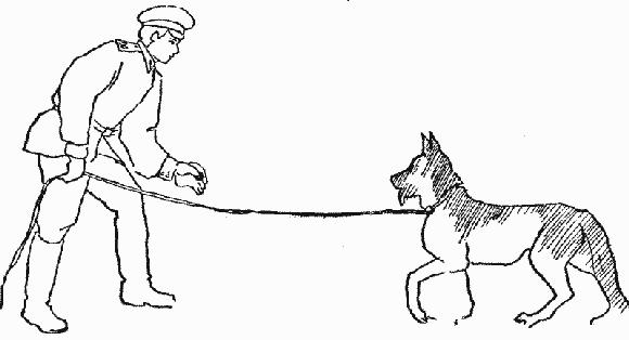 Дрессировка служебных собак