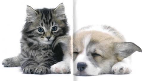 Что хочет ваша кошка: Научитесь понимать вашу кошку