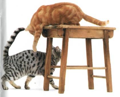 Перевод с кошачьего: Научитесь разговаривать со своей кошкой