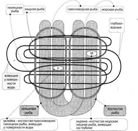 Лабиринты мышления, или Учеными не рождаются