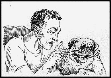 Собаки!