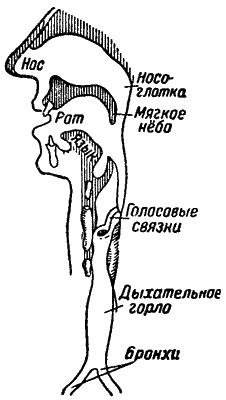 Звук и слух