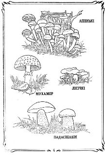 Лесные зарисовки