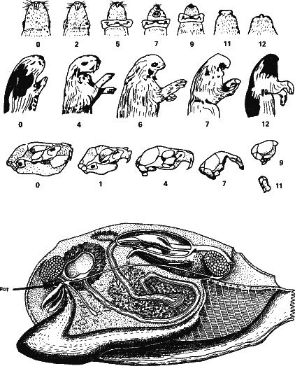 Аксиомы биологии