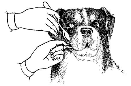 Пойми друга. Справочник по поведению собак