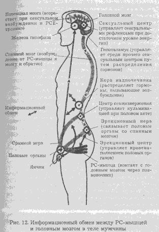 Сексуальная энергия. Ключ к здоровью и процветанию