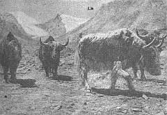 В горах Памира