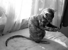 Кошки - рексы