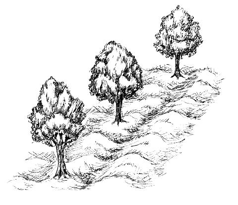 Сад и участок. Удобрения и подкормки