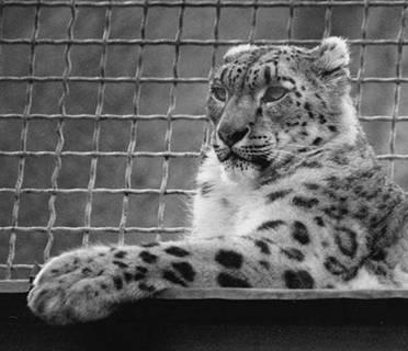 Рекорды в мире животных