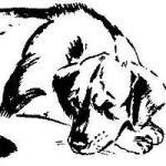 Из жизни бродячих собак