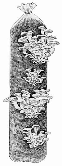 Выращивание грибов