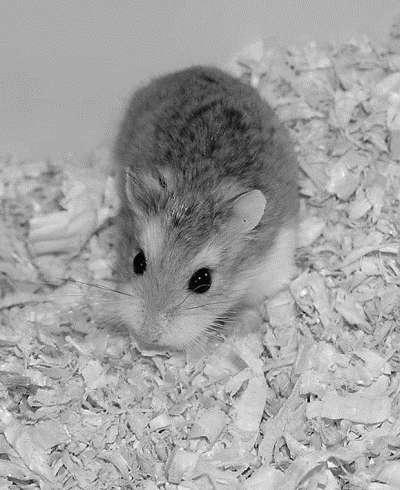 Лечение декоративных кроликов и грызунов