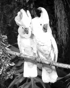 Попугаи