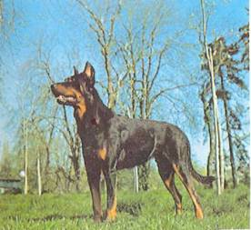 Энциклопедия собаки. Рабочие собаки