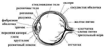 Супер-зрение. Лучшие рецепты народной медицины от А до Я